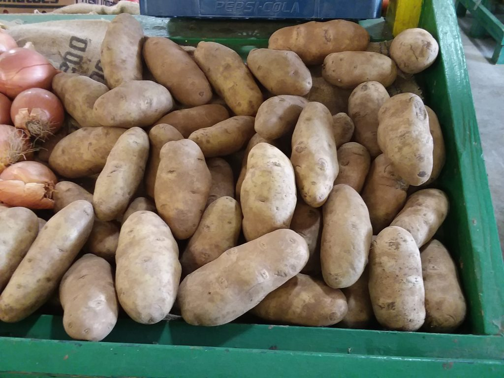 Large White Potatoes